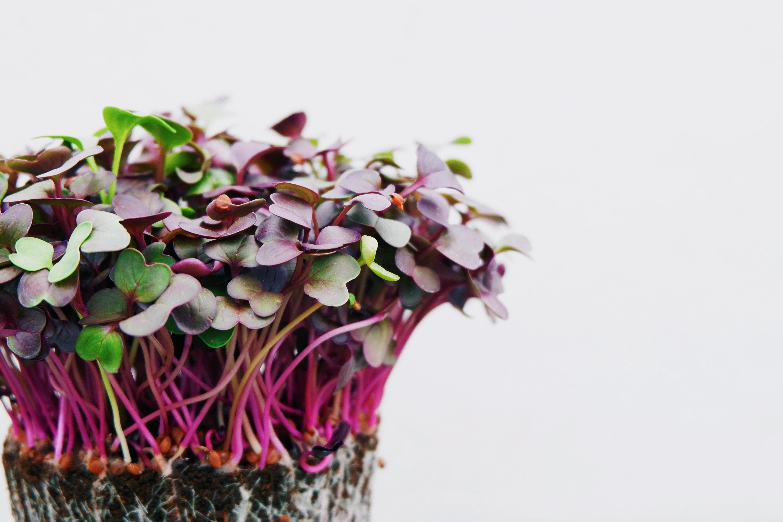 La permaculture du quotidien