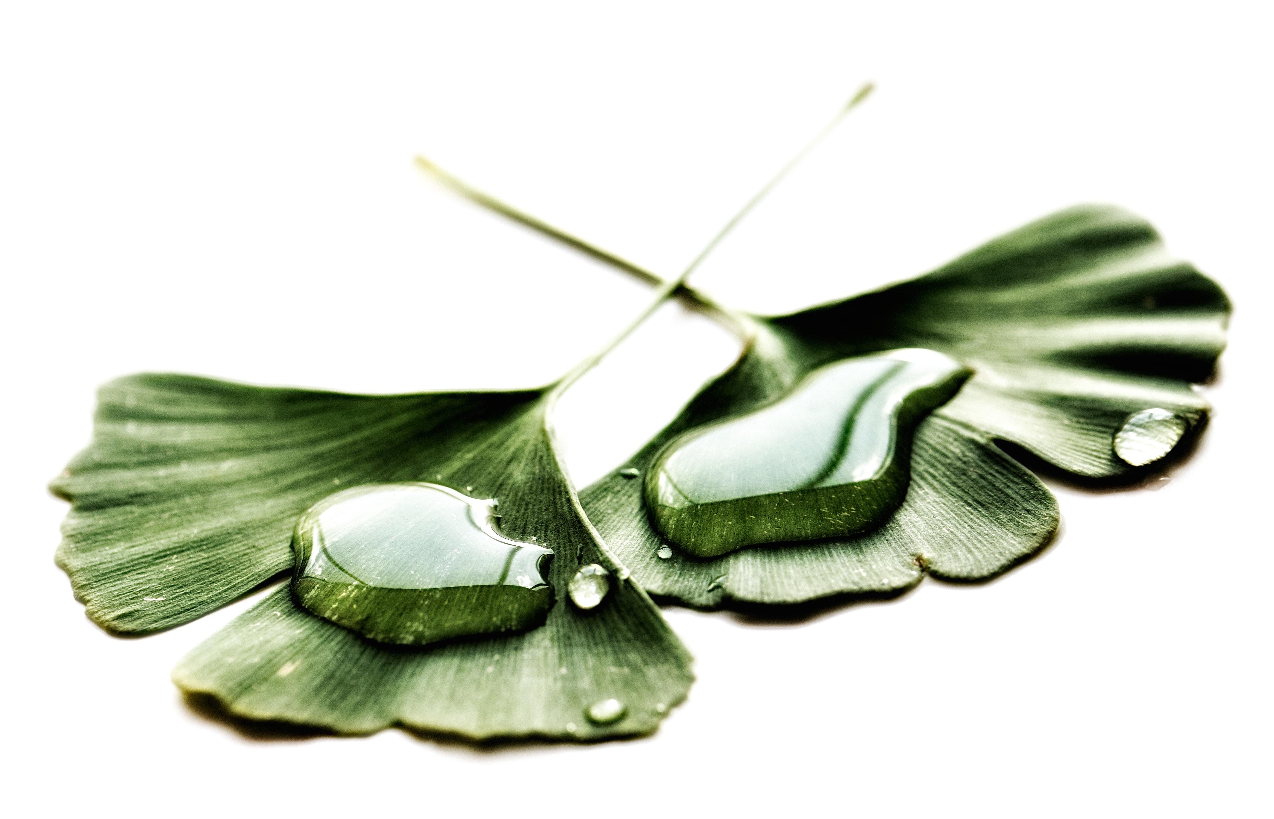 Les émotions, un jardin à cultiver – partie 3